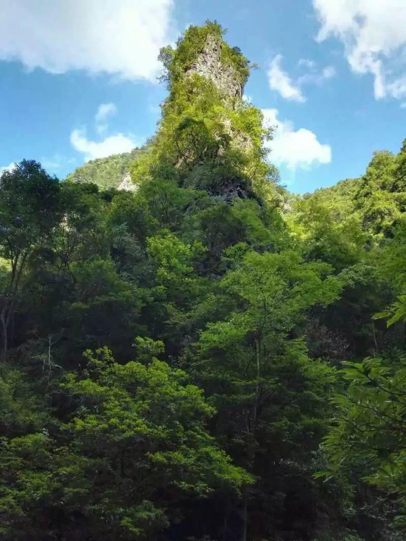 摄影展示-中亚楠木林风景区欢迎您!